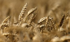 Ministry of Agrarian Policy and Food upgraded the forecast of grain crops yield by 7.3%