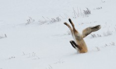 Финалисты конкурса Сomedy Wildlife Photography Awards