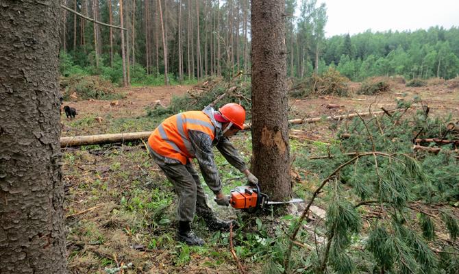 Руководство готовится передать НАБУ иГенпрокуратуре интерактивную карту с нелегальными вырубками лесов