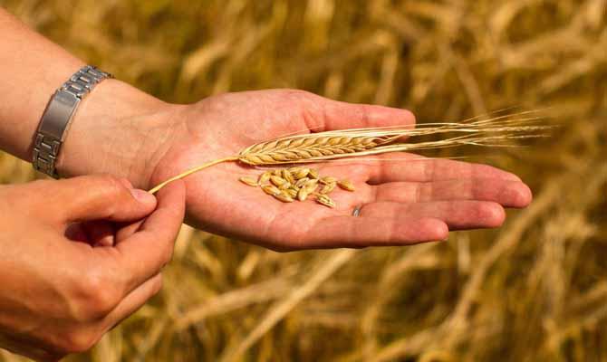 Украина установила рекорд вэкспорте зерновых