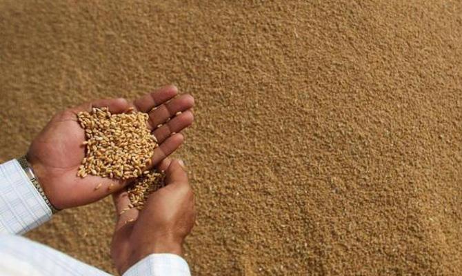 В Египте рассмотрят запрет импорта российской пшеницы со спорыньей