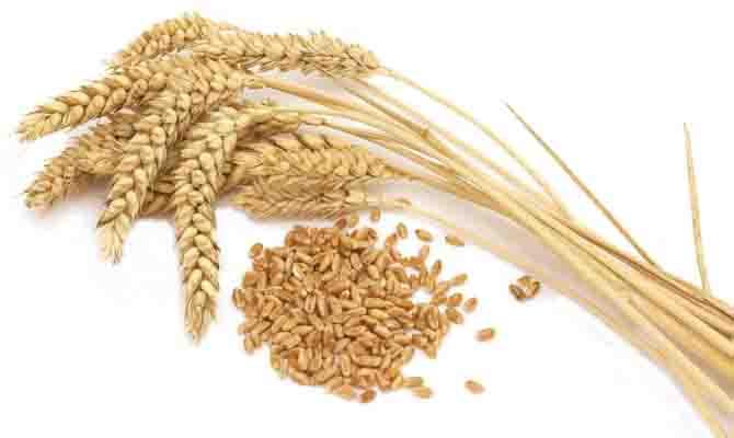 Украина вследующем году собрала рекордный урожай зерновых