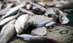 Рыбный патруль заработал еще в 4 областях Украины