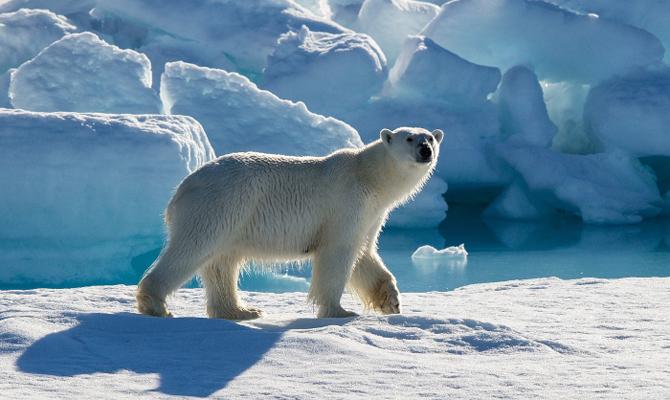 Российская Федерация иСША подписали общее объявление овзаимодействии вАрктике
