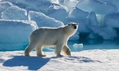Восемь стран договорились о совместном сотрудничестве в Арктике