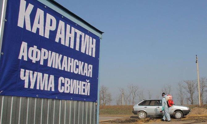 Украина потеряла 130 тысяч поголовья из-за африканской чумы свиней