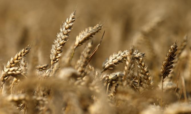 ВОренбуржье намолочено 3,8 млн тонн зерна
