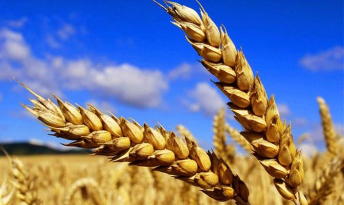 Украина вошла вТОП-10 поставщиков продовольствия вЕС