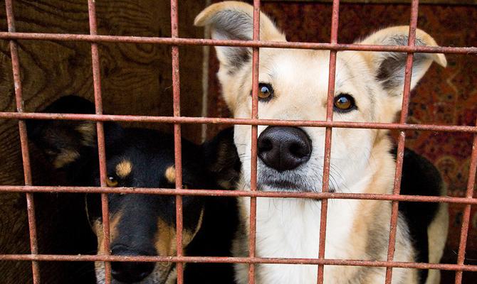 ЕС выделил 90 тыс. евро украинскому приюту для животных