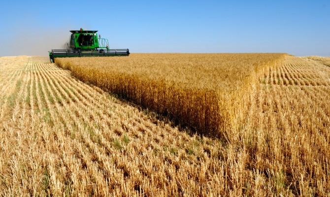 ГФС: ссамого начала сезона экспорт зерна составил приблизительно 19,6 млн тонн