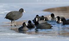 На Херсонщине сожгли 9 тысяч тушек птиц, погибших в Черном море