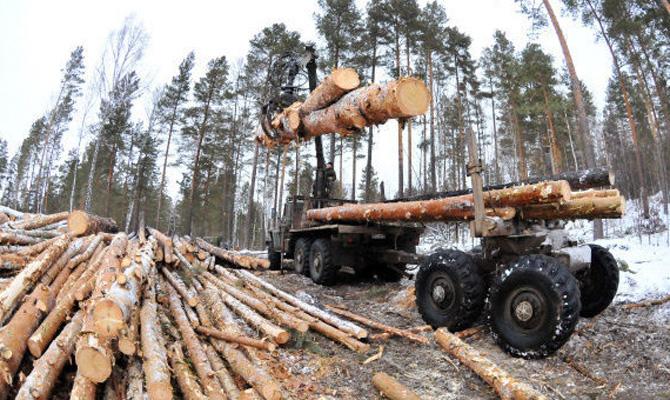 Поліція покриває незаконні рубки деревини на Косівщині? (фото+відео)