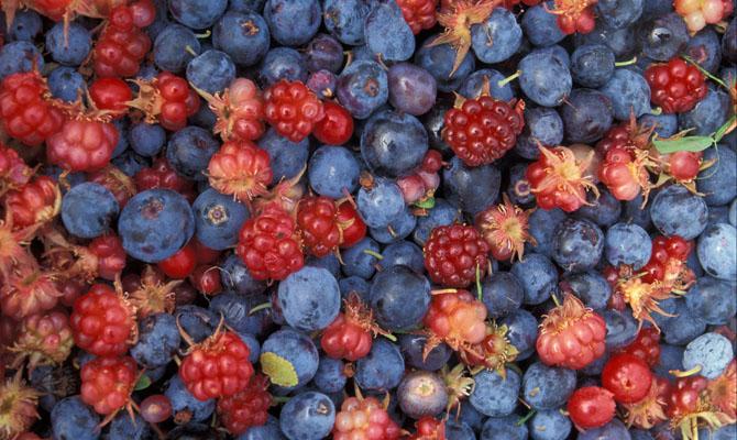 Украина собрала в 2017 году 2 млн тонн плодов и ягод