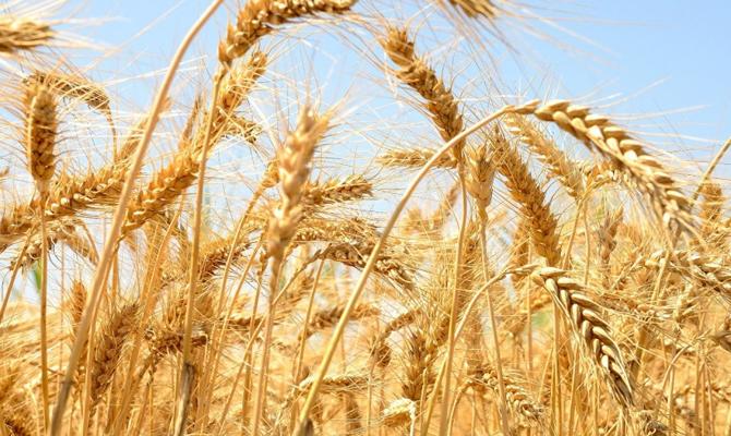 Украина экспортировала неменее 25 млн тонн зерновых