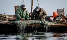Украина и РФ поделили лимиты на улов рыбы в Азовском море