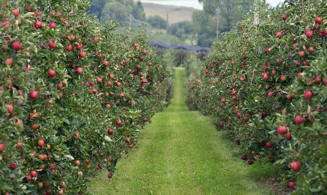 В Украине ожидают рост урожая плодово-ягодной продукции до 30%