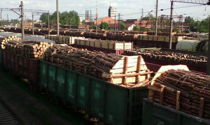 Одна пятая незаконной древесины из Украины попадает в Польшу