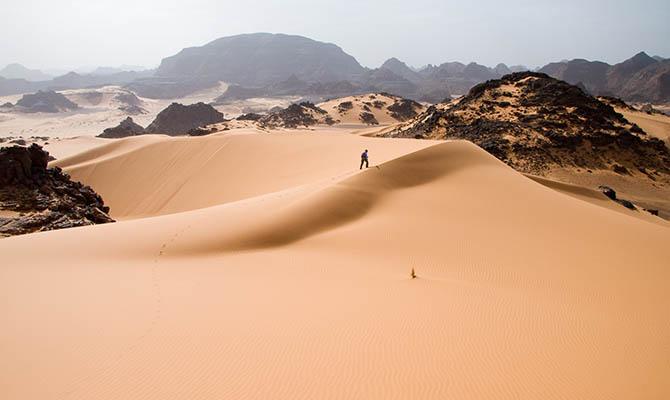 Ученые придумали, как озеленить Сахару и остановить глобальное потепление
