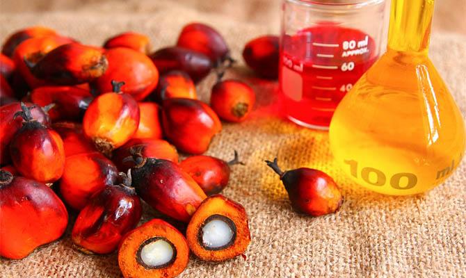Украина продолжает наращивать импорт пальмового масла
