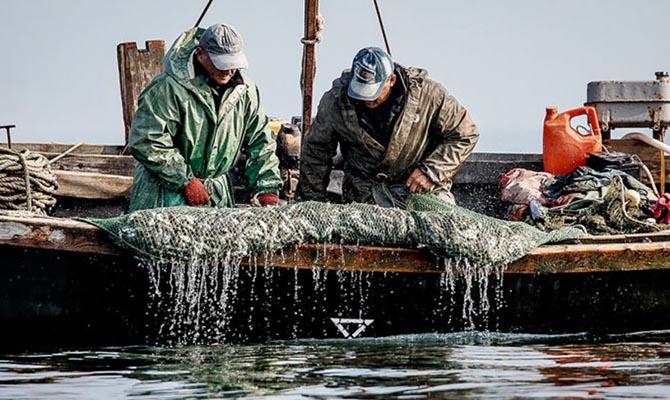 Промышленный вылов рыбы в Азовском море увеличился почти в четыре раза