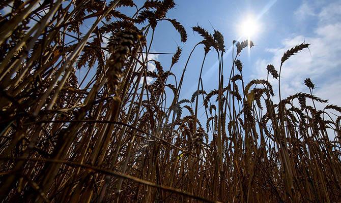 Минэкономики снизило прогноз урожая зерновых в Украине