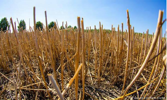Одесская область просит от правительства помощи из-за засухи