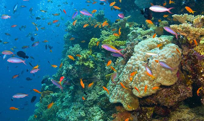 Половина кораллов Большого Барьерного рифа уже исчезла