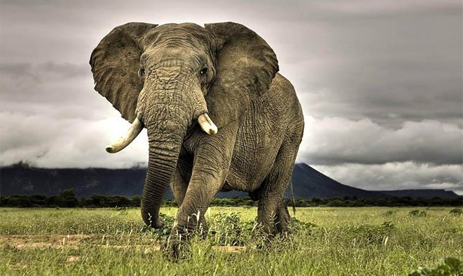 Намибия выставила на продажу 170 диких слонов