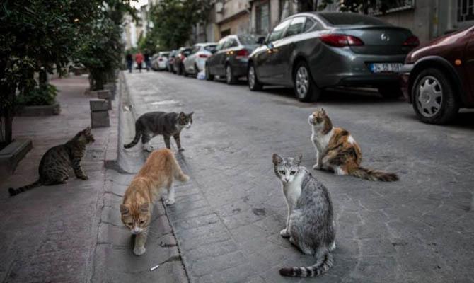 Желающим покормить в Ницце бездомных кошек нужно будет получать сертификат