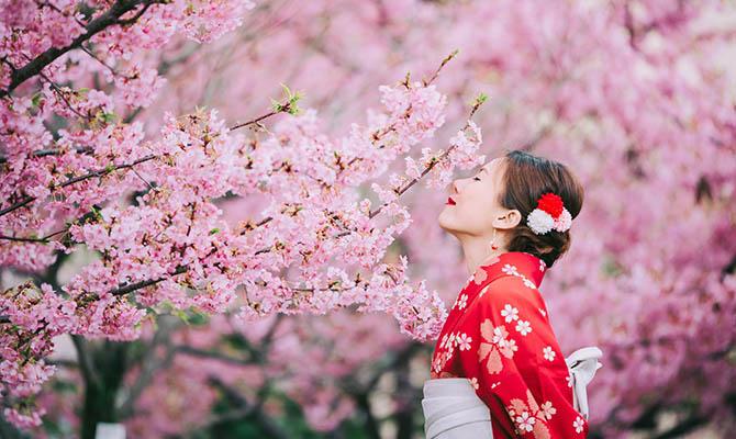 В Японии зацвела первая сакура