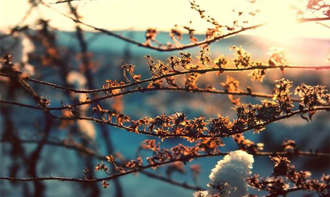 В конце недели и в начале следующей по всей Украине ожидаются ночные заморозки