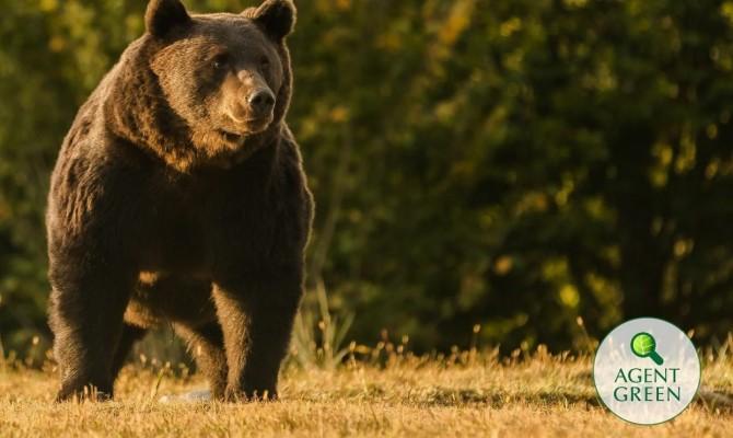 Принца Лихтенштейна обвинили в убийстве самого крупного бурого медведя в Румынии