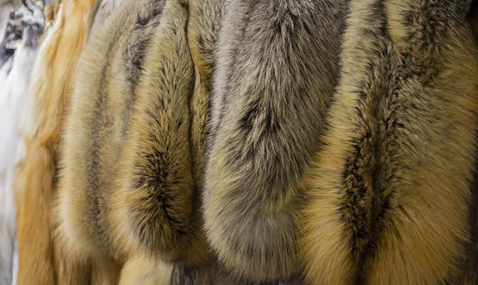 Правительство Великобритании может запретить продажу меха