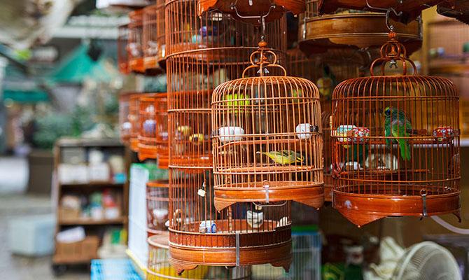 В Китае выявили первый случай заражения человека штаммом птичьего гриппа H10N3