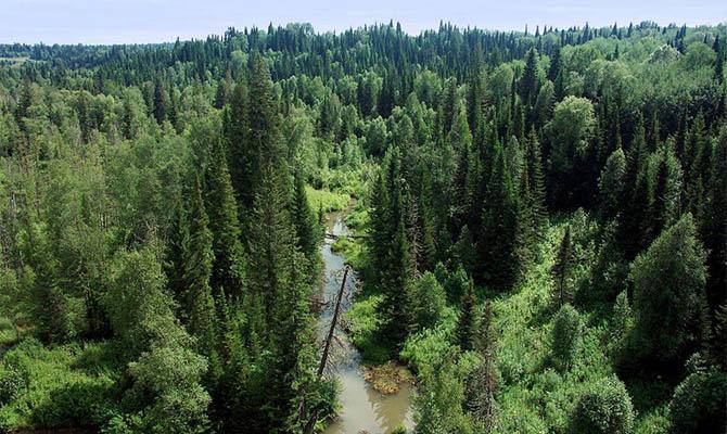 В Украине проведут инвентаризацию водных и лесных ресурсов