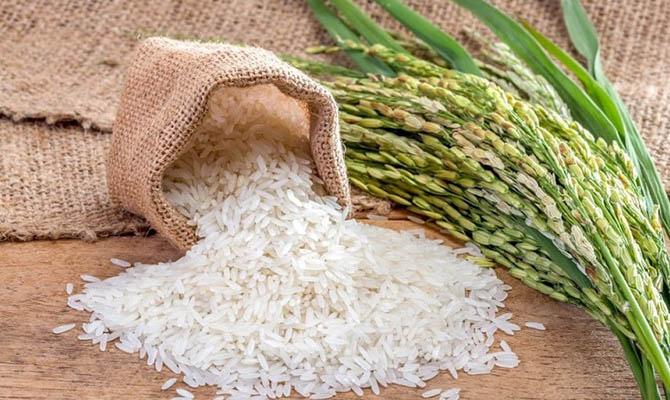 Китай собрал первый урожай риса из побывавших в космосе семян