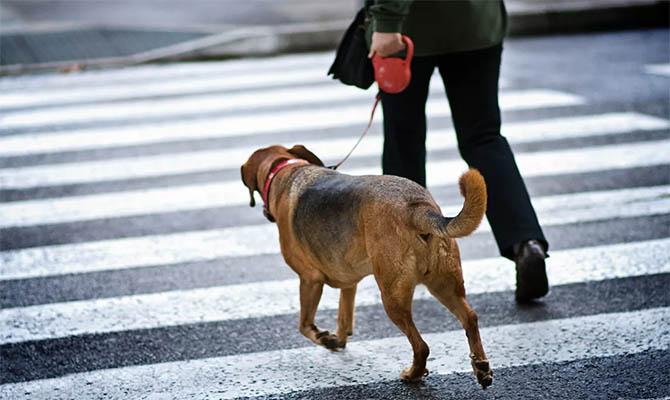 В Тель-Авиве с помощью ДНК будут выявлять хозяев, не убирающих за собаками